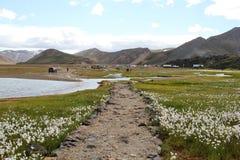 Isländskt sommarlandskap. Arkivfoton