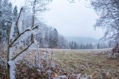 Isl?ggningfilial i Moravian Beskydy berg, Tjeckien royaltyfri bild