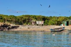 Isla伊莎贝尔在离Mexico's里维埃拉纳亚里特州海岸的附近 免版税库存图片