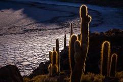 从Isla印加瓦西峰, Uyuni,玻利维亚的看法 库存图片
