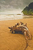 Isla Boca Brava,Panama Royalty Free Stock Photo