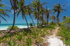 Isla Contoy Imágenes de archivo libres de regalías