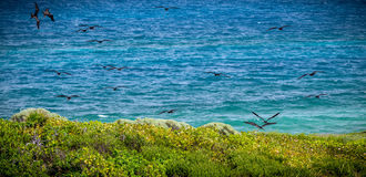 Isla Contoy landscape and frigate birds, Mexico Stock Photography