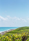Isla Contoy landscape, Mexico Stock Image