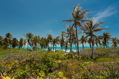 Isla Contoy in Mexico. National park Isla Contoy in Mexico Royalty Free Stock Image