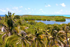 Isla contoy   sand   in mexico  Royalty Free Stock Images