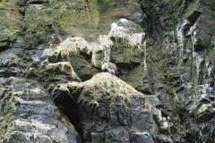 Isla Damas nära La Serena Chile arkivfoto
