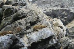 Isla Damas nära La Serena Chile arkivbild