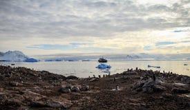 Isla de Cuverville, la Antártida Foto de archivo