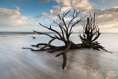 Isla de Edisto de la playa de Boneyard de la bahía de la botánica de Charleston foto de archivo