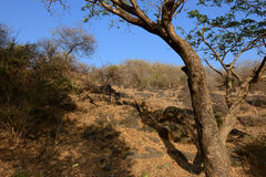 Isla de Elephanta Foto de archivo libre de regalías