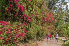 Isla de Flowerwall Zanzíbar Fotos de archivo