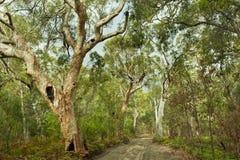 Isla de Fraser de los bosques de la selva, Australia foto de archivo