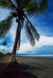 Isla de Garza Fotos de archivo