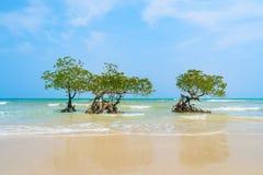 Isla de Havelock en las islas de Andaman y de Nicobar foto de archivo libre de regalías