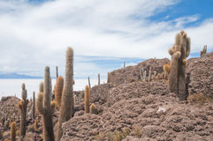 Isla de Incahuasi en Salar de Uyuni, Bolivia Imágenes de archivo libres de regalías