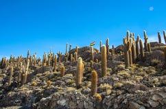 Isla de Incahuasi, Uyuni Salar de Uyuni salino, Aitiplano, Bolivia Imagen de archivo libre de regalías