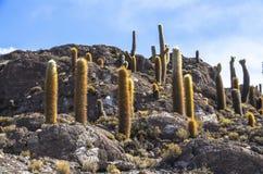 Isla de Incahuasi, Uyuni Salar de Uyuni salino, Aitiplano, Bolivia Imagen de archivo