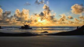 Isla de Jekyll de la playa de la madera de deriva Imágenes de archivo libres de regalías