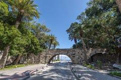 Isla de Kos de la avenida de la palma Imágenes de archivo libres de regalías