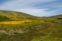 Isla de la canal - Islas Malvinas Foto de archivo