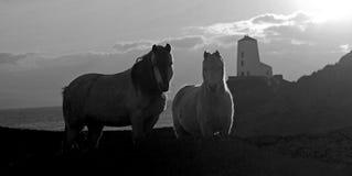 Isla de Llandwyn Imagenes de archivo