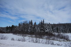 Isla de los árboles de hoja perenne, gran bosque del norte, NH Imágenes de archivo libres de regalías
