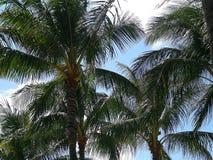 Isla de los árboles de Oahu Hawaii Imagen de archivo libre de regalías