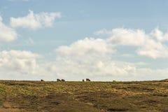 Isla de los paisajes de Lewis, Escocia Imagen de archivo libre de regalías