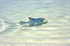 isla de los pescados contoy   en onda soleada del descenso de México Fotografía de archivo