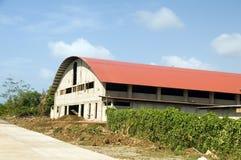 Isla de maíz grande del centro del gimnasio de la aptitud de la reconstrucción de los deportes interiores Fotografía de archivo