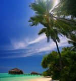 Isla de Maldives Fotos de archivo