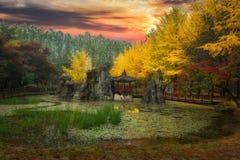 Isla de Nami en la temporada de otoño Imagenes de archivo