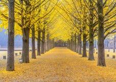 Isla de Namiseom en el otoño, Corea del Sur Fotos de archivo libres de regalías