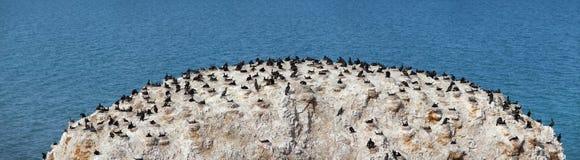 Isla de pájaro Imagen de archivo