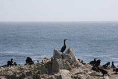 Isla de pájaro Imagen de archivo libre de regalías