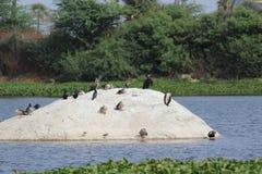 Isla de pájaros foto de archivo libre de regalías