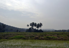 Isla de palmas Fotos de archivo libres de regalías