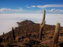 Isla de pescado cactus salar de uyuni in Bolivia Royalty Free Stock Image