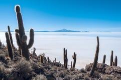 Isla de Pescadores, lago salt Uyuni en Bolivia imagenes de archivo