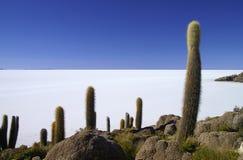 Isla De Pescadores. On Uyuni Salt Flats in Bolivia Stock Photography