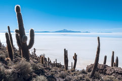 Isla de Pescadores, Zout meer Uyuni in Bolivië stock afbeeldingen