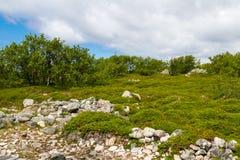 Isla de Zayatsky, archipiélago de Solovetsky Fotografía de archivo