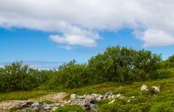 Isla de Zayatsky, archipiélago de Solovetsky Foto de archivo libre de regalías