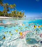 Isla debajo y por encima de la superficie tropicales fotos de archivo