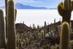 Isla del cactus fotografía de archivo