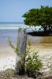 Isla del paraíso en las llaves de la Florida Imagenes de archivo
