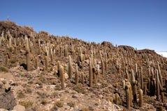 isla del Pescado,撒拉族de Uyuni,玻利维亚 图库摄影