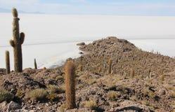 Isla del Pescado in Bolivia immagine stock