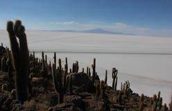 Isla del Pescado in Bolivia fotografia stock libera da diritti